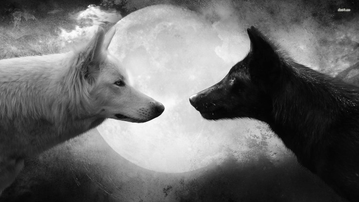 19358-a-black-and-a-white-wolf-1920x1080-artistic-wallpaper